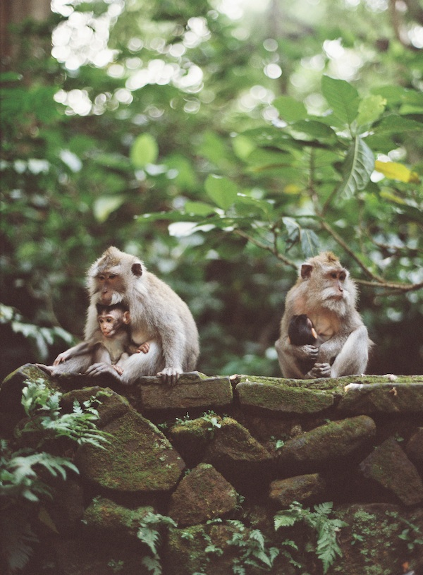 Bali+destination+wedding+monkeys